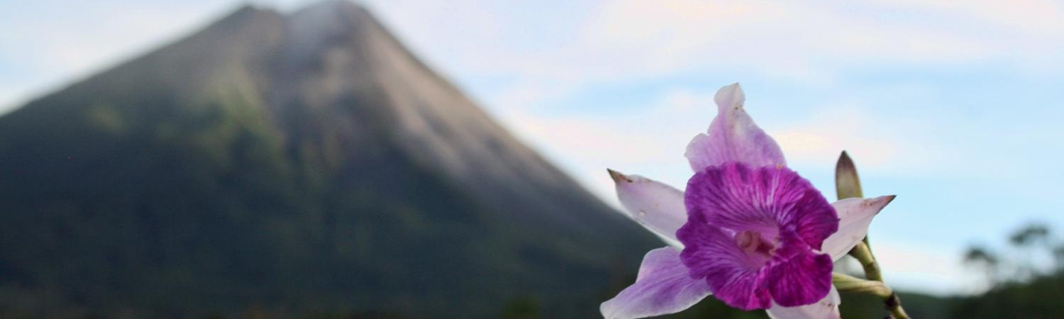 Arenal and flowers