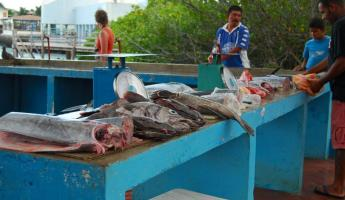 Fresh fish at the docks of Punta Ayora