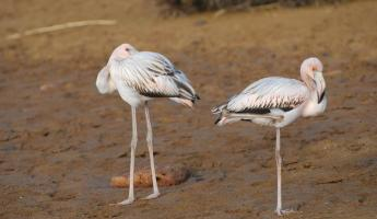 Flamingoes just before sunset in the Galapagos