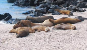 So many sea lions, so much time!