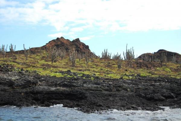 Lava rock and cactus create a rugged shoreline in the Galapagos