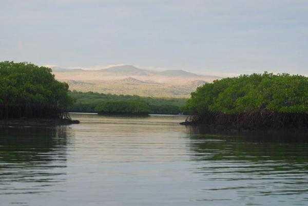 Black Turtle cove with mangroves