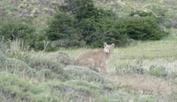 I spotted this Puma from the van...very lucky!