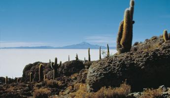 Bolivia, Fish Island in the Salar de Uyuni