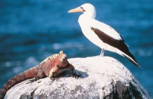Amazing wildlife awaits you in the Galapagos!