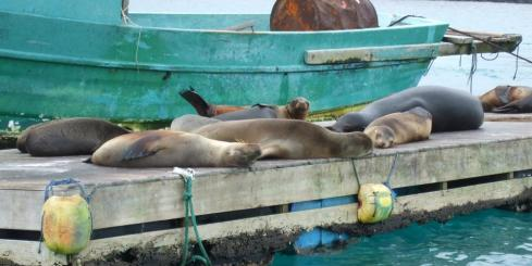 lounging in the harbor - Santa Cruz