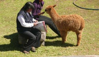 ladies and alpaca outside out hotel room