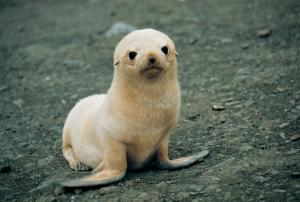 Sea lion pup found during a wildlife tour of Chile
