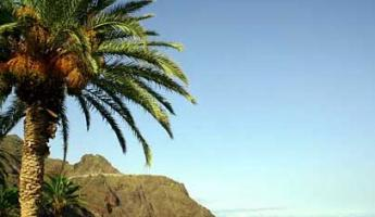 Enjoy the subtropical Canary Islands