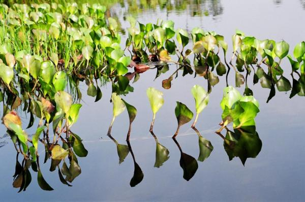 Water plants on an Ecuador tour