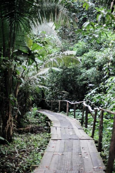 Jungle paths during a tour of the Amazon in Ecuador
