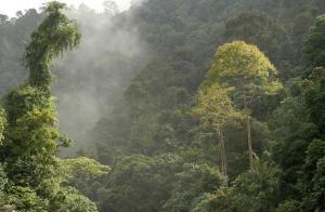 Lush tropical rainforests beckon