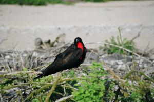 Birdwatching on Genvesa island while on a Galapagos cruise