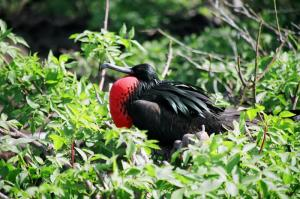 Plenty of wildlife and birdwatching in the Galapagos Islands