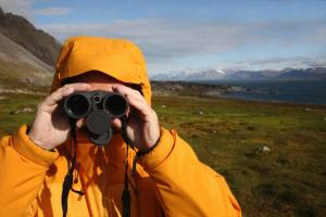 Wildlife viewing on an Arctic tour