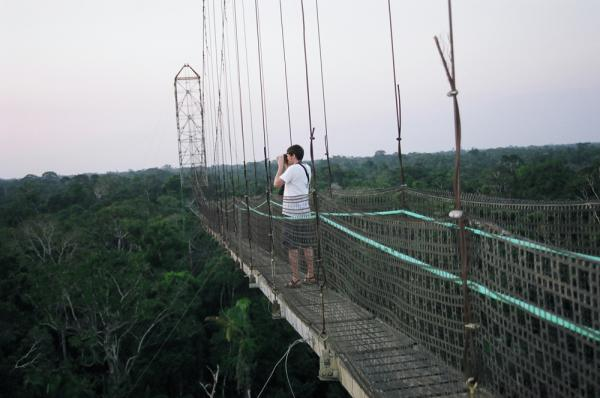 Trip on a canopy walkway over the Amazon jungle in Ecuador