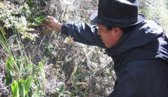 Antonio shows us medicinal plants on the Cuicocha Hike