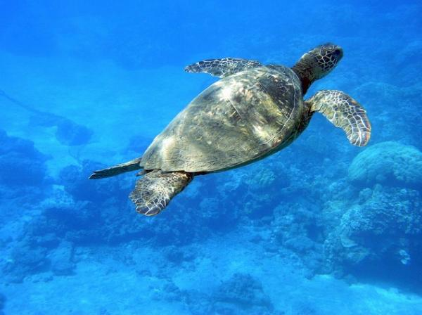 Snorkel with a wide array of fascinating sealife