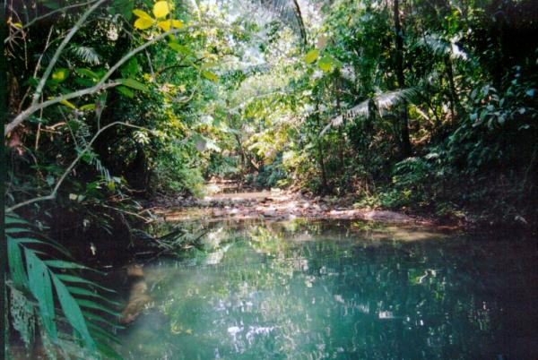 Remote jungle tour of Belize