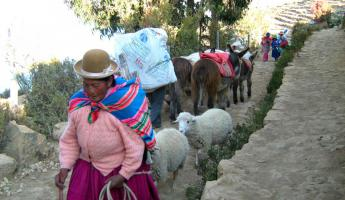 A local woman and livestock in Isla del Sol