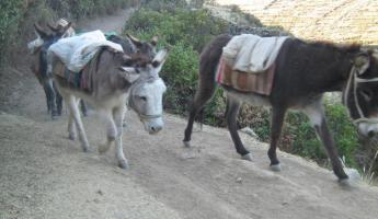 The donkeys carry our gear