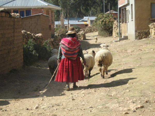 A woman leads her sheep through the streets of Isla del Sol