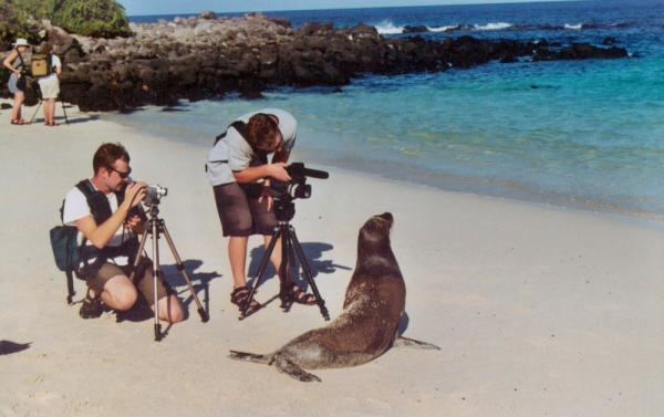 Photographing a sealion on a Galapagos cruise