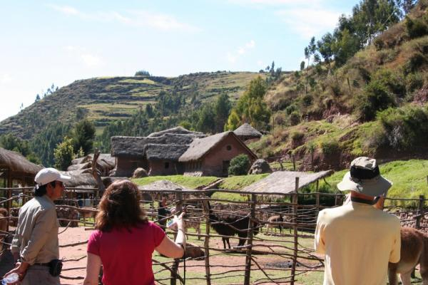 Visit a llama farm in the Sacred Valley during your Peru tour