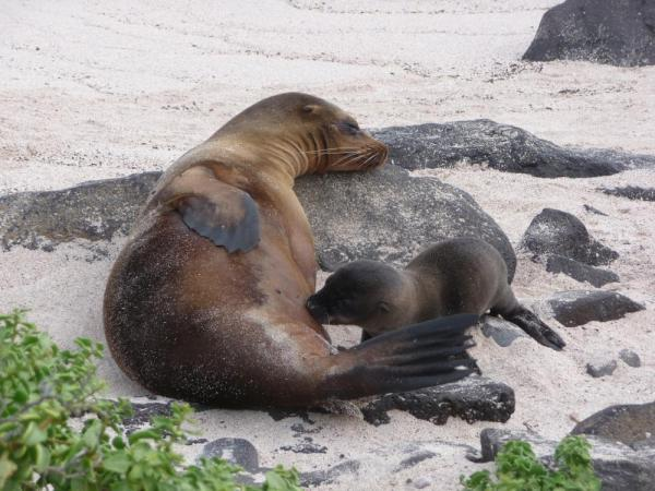 Nursing sea lions - not a care in the world