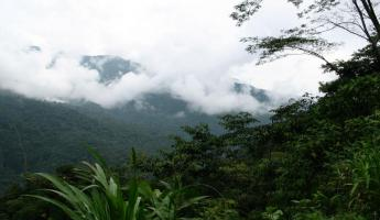 The Costa Rican Rain Forest