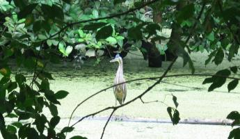 A Heron in the Pond