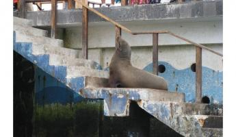 The first sea lion greets us at the pier