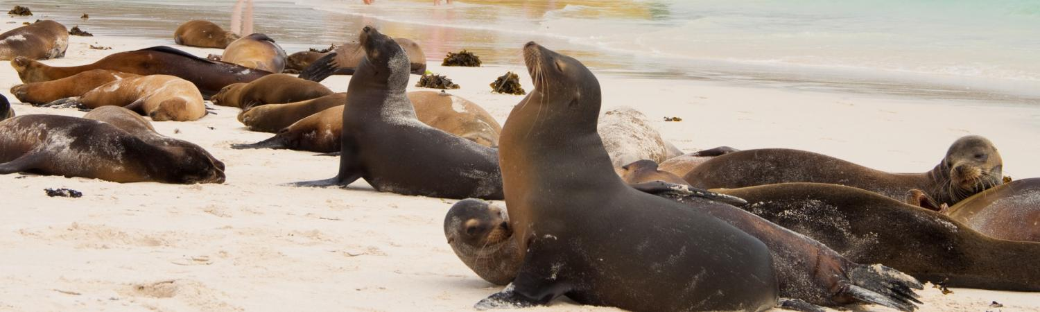Explore secluded shores of the Galapagos on your small ship cruise