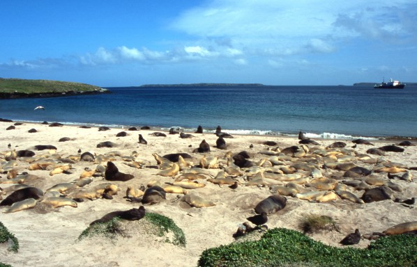 A remote sandy bay filled with sea lions