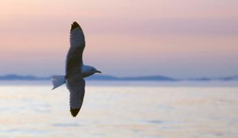 View an abundance of birds on your expedition cruise
