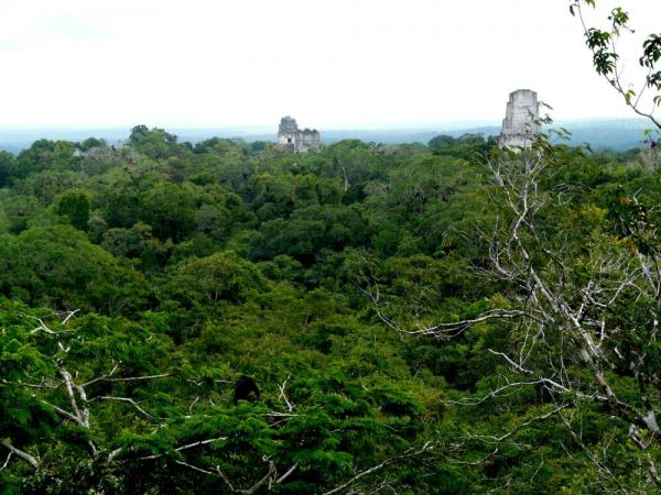 Views from Templo IV in Tikal