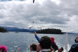 Gulls at Nahuel Huapi lake