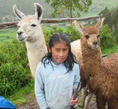 little girl with her llamas