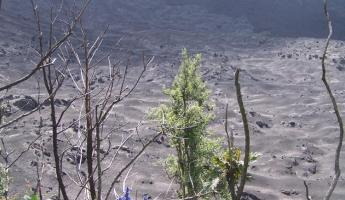Landscape on Pacaya Volcano