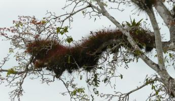 Branches are home to many epiphytes