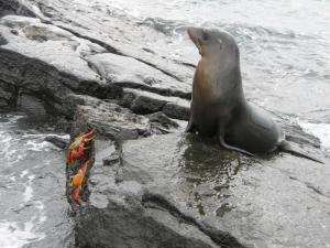 Wildlife sightings abound in the Galapagos Islands