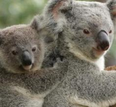 Enjoy the wildlife at the Billabong Sanctuary in Australia