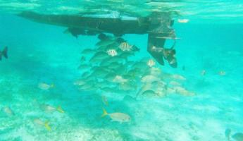 Schools of fish hanging out under our boat