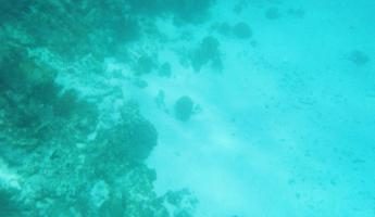 There\'s a puffer fish down there...