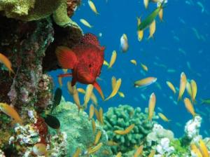 Incredible snorkeling opportunties