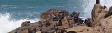 Sea lion colony in Cabo Polonio