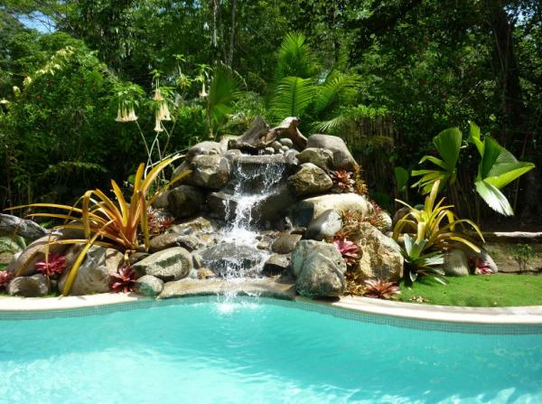 Tropical beauty around the pool