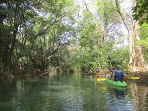 Kayaking Boom Creek