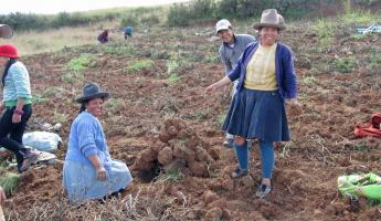 Potato farm by Chinchero