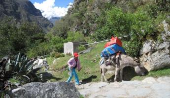 Exploring the ins and outs of Peru